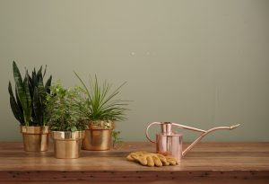Potted plants and watering can
