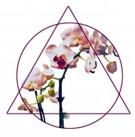 Wildflower Services logo.